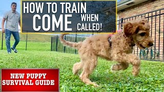 "NEW PUPPY SURVIVAL GUIDE: Prepare Your Canine to ""COME"" No Matter What!  Latest Pet News & Insurance Deals mqdefault"