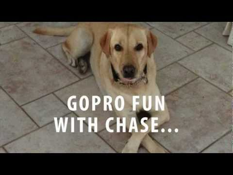 Fetch From A Dog's Perspective Looks Way More Fun Than Just Throwing The Ball