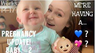 Pregnancy Update + GENDER REVEAL - Weeks 14-17 - Second Pregnancy
