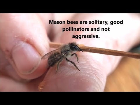 Second Chance For A Baby Bee