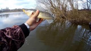 Ловля щуки в разлив на реке