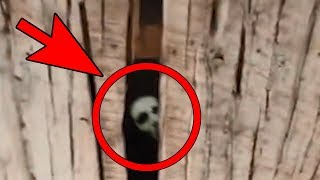 Video 5 SCARY Unexplained Sounds You DON'T Want To Hear ! MP3, 3GP, MP4, WEBM, AVI, FLV Agustus 2019