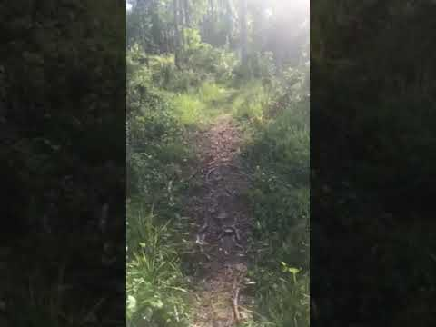 Video Of Oyster Point Campground, NC