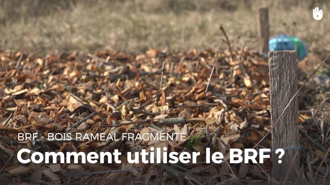 Comment utiliser le brf bois ram al fragment - Pate a bois comment l utiliser ...