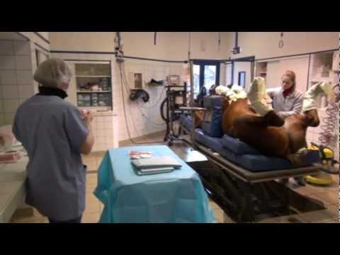 Comment traiter la prostatite chez les femmes