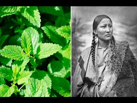 Video 6 Plants Native Americans Use To Cure Everything