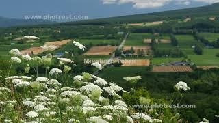 畑の動画素材, 4K写真素材