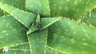 Is Aloe Vera Gel the Best Treatment for Lichen Planus?