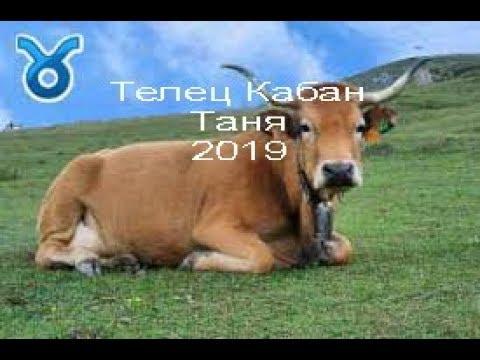 Телец Кабан Татаьяна на 2019 год огт J Dzay