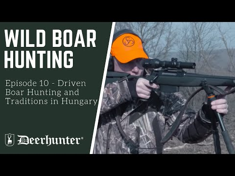 Driven Boar Hunting and Traditions in Hungary
