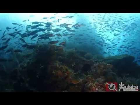 Raja Ampat - Heaven on Earth