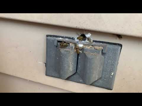 Yellow Jacket Nest Found in Electrical Outlet in Montgomery, NJ