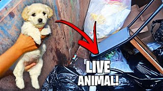 RESCUED ! DOG FOUND In PET STORE DUMPSTER ! WHAT HAPPENED ?! DUMPSTER DIVING AT THE PET STORE!!