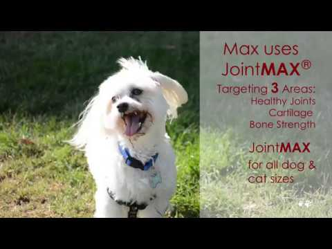 3-PACK Joint MAX Regular Strength (540 Chewable Tablets) + FREE Joint Treats Minis Video