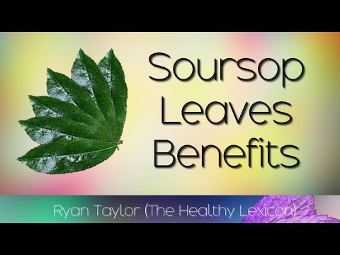 Video Soursop Leaves: Benefits and Uses (Guyabano)