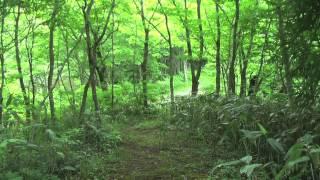 吾妻山森林浴