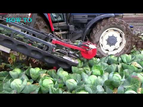 , title : 'How To Start Cabbage Farming | How To Machines