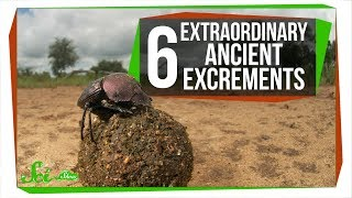 6 Extraordinary Ancient Excrements
