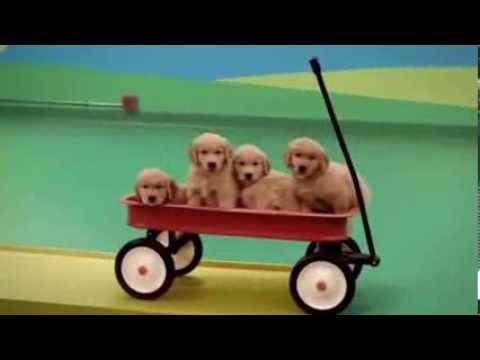 מכונת רוב גולדברג של כלבים חמודים