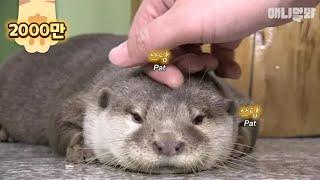죽을 뻔 한 아기 수달을 살려줬더니 생긴 일 ㅣ What Happened After Rescuing A Nearly Dying Baby Otter Is..