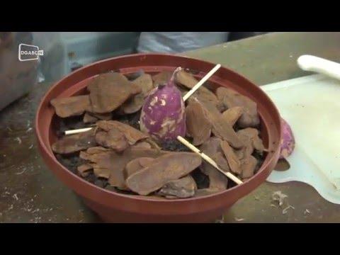 Saiba montar um arranjo ornamental com batatas; veja vídeo