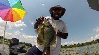 Shellcracker Fishing catching Huge Monster Slabs