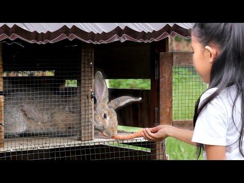 Video shinta memelihara kelinci - my new pet rabbits - my cute bunnies