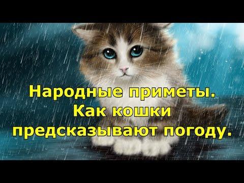 Народные приметы. Как кошки предсказывают погоду.