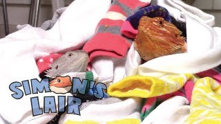 Funny Bearded Dragons - Reptile Adventure - Sock Song - Simon's Lair