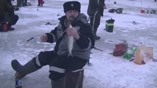 Сахривер отчет о рыбалке август 2020
