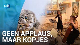 Klassiek concert voor eenzame katten