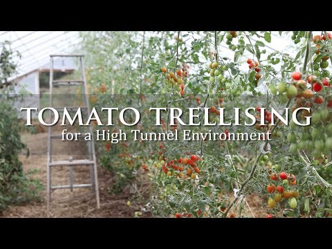 , title : 'Tomato Trellising for a High Tunnel Environment