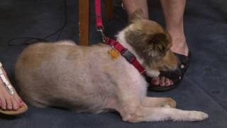Pet of the Week - Robby