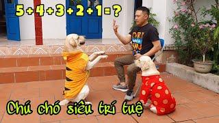 Chú chó Củ Cải đi thi Siêu Trí Tuệ Việt Nam, ai cũng phải trầm trồ   Super Brain Dog