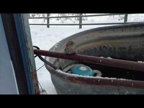 他發現這隻小鳥雙腳凍結無法飛走,接著大家就看到今天最暖心的畫面!