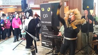 preview picture of video 'Cats flash mob at Lansdowne Place in Peterborough'
