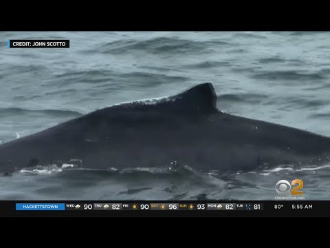 N.J. Father, Son Come Face-To-Face With Whale