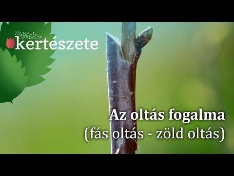 Biztonságos gyógyszer a helminták ellen