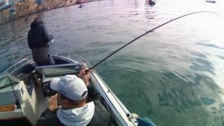 Ловли пресноводной рыбы в крыму 2020