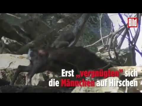 Tante Neffe verführt sex video