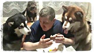 ПРИКОЛЫ С ЖИВОТНЫМИ, смешные собаки и кошки | FUN WITH ANIMALS, funny cats vs dogs #441
