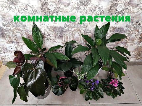 Комнатные растения с названиями!