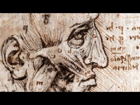 Glimpse Into The Archives Of Da Vinci's Anatomical Drawings