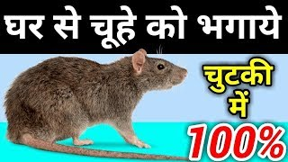चूहों को भगाने के घरेलु नुस्खें -  Get Rid of RATS MOUSE MICE PERMANENTLY Quickly
