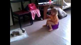 Лучшее видео смешные приколы дети и животные щенки ши-тцу