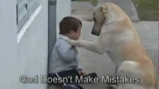 Sweet Mama Dog Interacting with a Beautiful Child Video