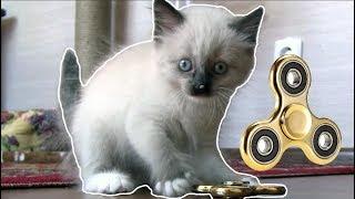 Смешной котенок Гав играет в спиннер.