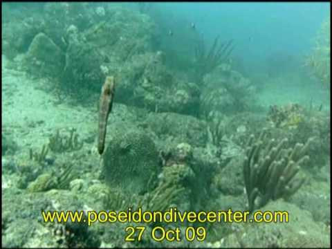 Seepferd - Taganga - Kolumbien, Taganga,Kolumbien