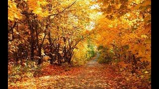 #осеньвшахане вручение выигрышей