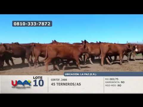 Lote Terneros/as en La Paz (Entre Ríos)